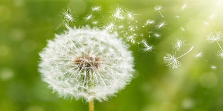 Le grand retour des allergies