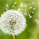 Le grand retour des allergies