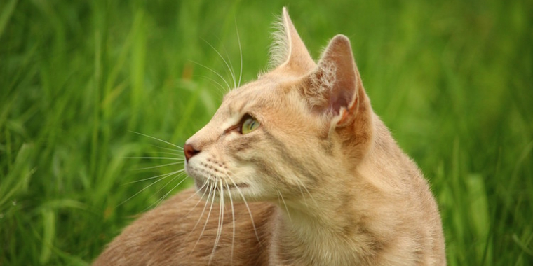 Mutuelles pour animaux : les médecines douces remboursées