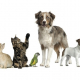 Les vétérinaires s'y mettent aussi
