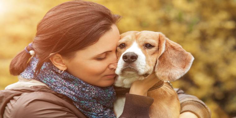 Des chiens contre les traumatismes