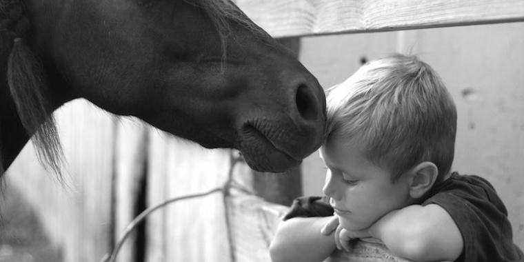 Les animaux nous soignent aussi