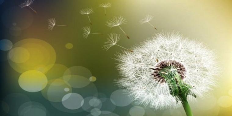 NAET, une méthode énergétique pour vaincre les allergies