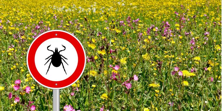 Limiter la progression infectieuse de la maladie de Lyme