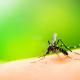 Moustiques : comment passer l'été tranquille ?