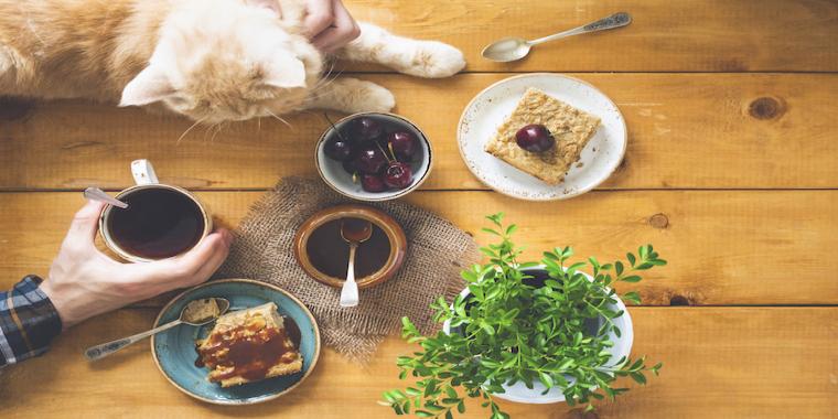 Ronronthérapie: les chats thérapeutes