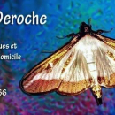 Cécile Deroche